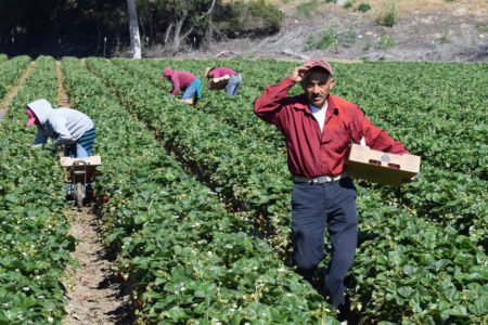Latino farmworkers cohesive culture research review